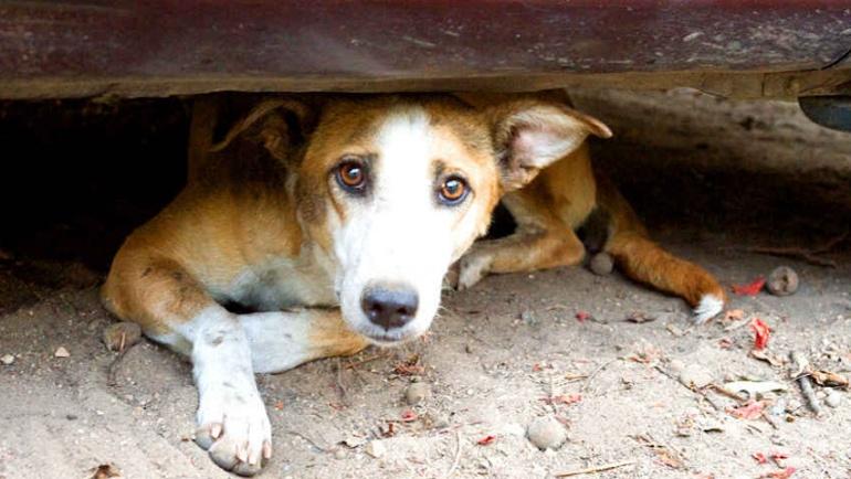 Κυρώσεις και ποινές για την κακοποίηση ζώων