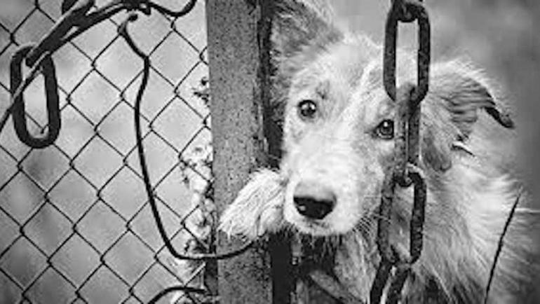 Καταγγελία για  κακοποίηση ζώων